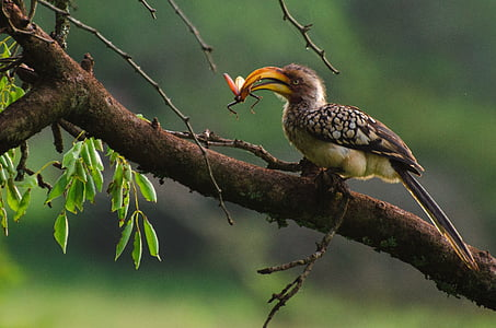 selective focus photography of brown curved-beak bird perched on tree branch preying on winged insect at daytime