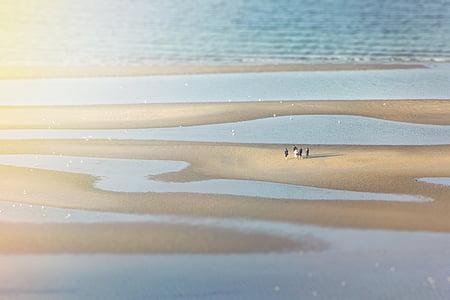group of people on low tide seashore
