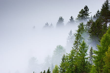 landscape photo of fog covering trees