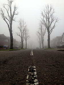 white line on concrete road between bare trees surrounded with fog
