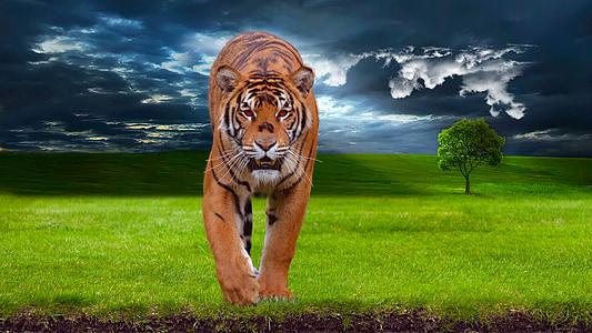 edited photo of tiger