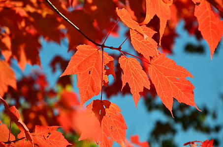 close up photography of maple leaf at daytime