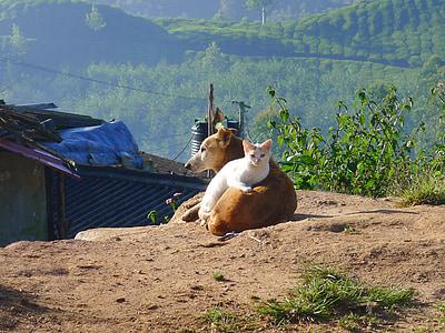 dog and cat under sunny sky