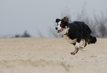 running black and white dog on white sand