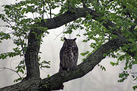 brown owl standing on tree branch
