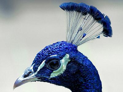 photo of blue bird