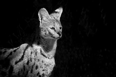 grayscale photograph of animal