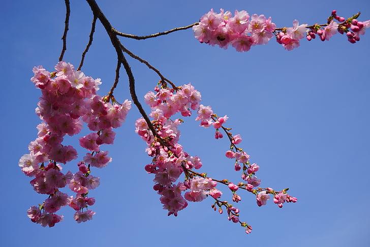 photo of sakura blossoms under clear blue sky