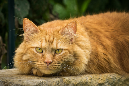 tabby cat lying on rock