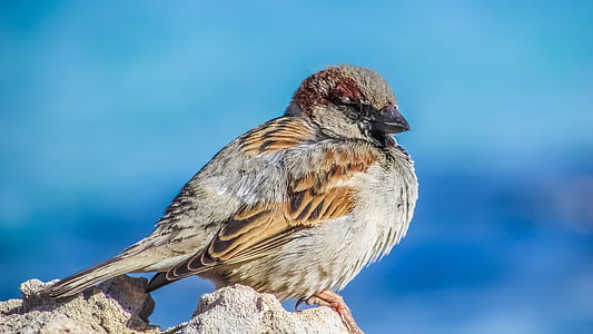 selective focus photography of brown sparrow