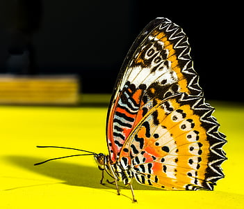 macro photography of yellow, orange, white, and black butterfly