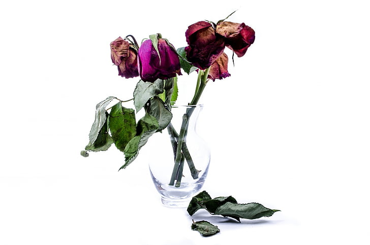 Royalty-Free photo: Dried rose flowers in vase | PickPik