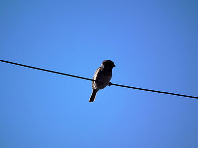 low angle photography of bird perched on cable wire