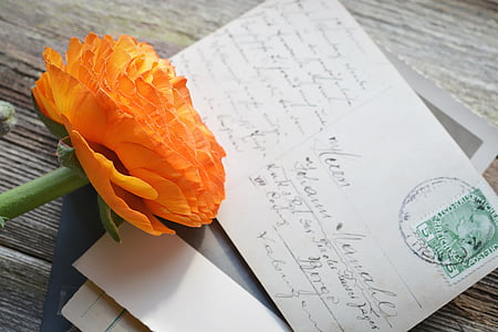 orange petaled flower on white mail card