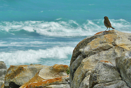 brown bird on grey rock in front of sea
