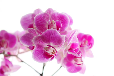 pink orchid flower macro photography