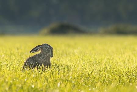 gray rabbit on green grass
