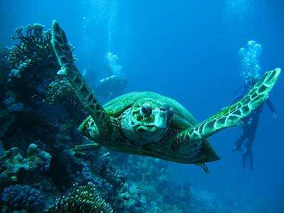 photo of turtle underwater