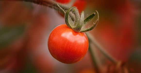 cherry tomato fruit