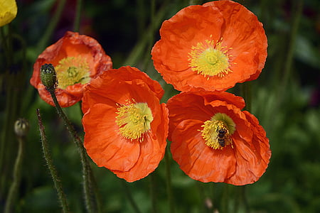 photo of orange petaled flowers