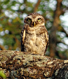 shallow focus photography of brown and white owl on tree branch