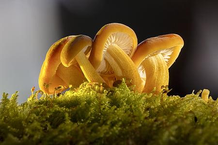 yellow mushroom in closeup photography