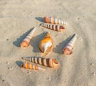 seven seashells on white sand at daytime