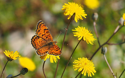 selective focus photography of brown fritillary butterfly perched on yellow petaled flower