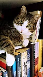 short-fur gray tabby cat lying on top of books