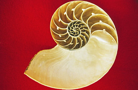 white conch shell on red surface