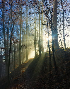 silhouette of trees hit by rays of sun during daytime