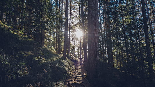 forest, nature, outdoors, path, sun, trees