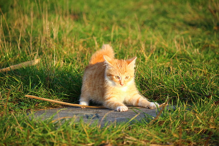 photo of orange cat surrounded by grasses