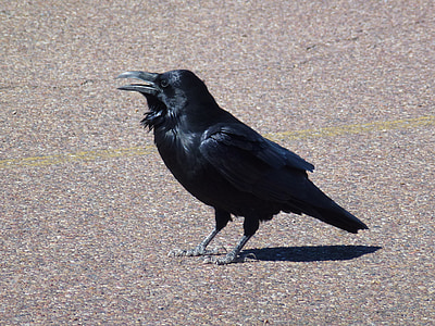 crow on floor during daytime