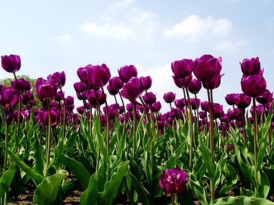 purple flowers on field during daytime