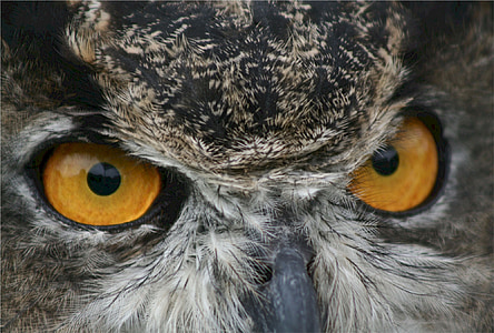 gray owl on focus photo