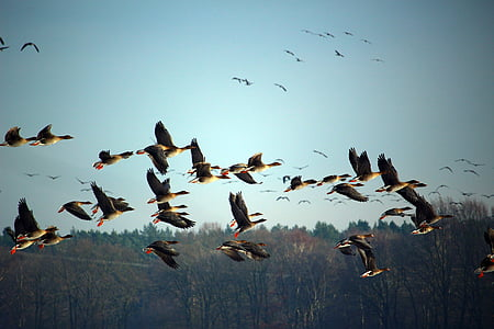 flying ducks over grass field