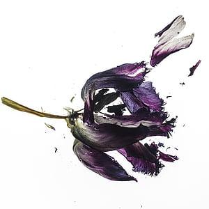 shattered purple petal flower