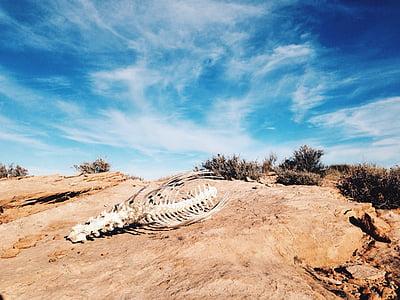 animal skeleton on desert during daytime