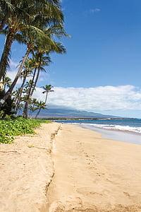 photo of seashore beside palm trees