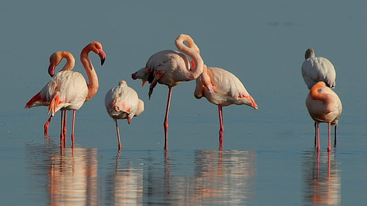 seven flamingos standing on body of water