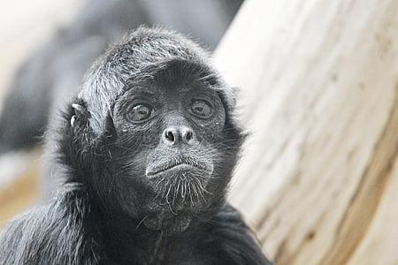 closeup photo of black ape