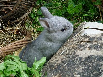 gray bunny behind the rock