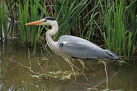 close up photo of bird on swamp
