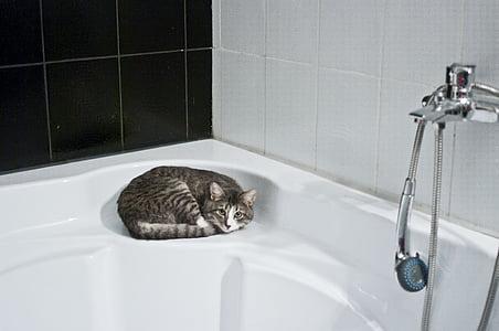 short-fur gray cat lying on white hot tub