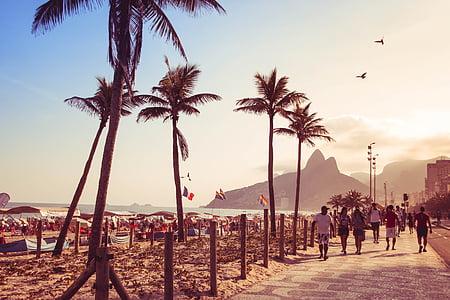 people walking near coconut trees