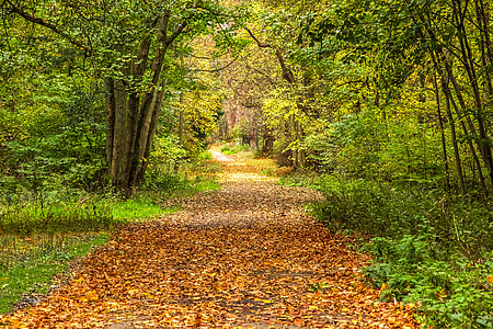brown leaves in pathway between green trees