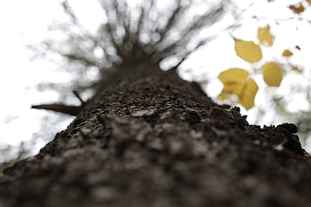 worm's eye view of a leafless tree
