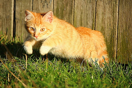 orange tabby kitten jumping on green grass during daytime