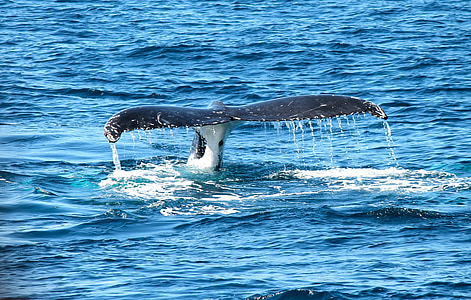 whale's tale flapping